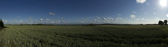 Panoramic field of rye Stock Photography