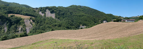 Panoramic field of wheat. Overview of a freshly cut field of wheat Royalty Free Stock Photo
