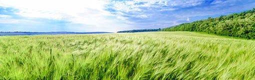 Panoramic field Stock Photos