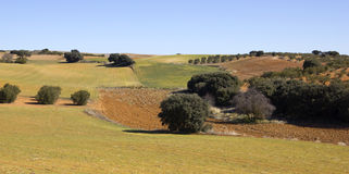Panoramic of the fields in Castile-La Mancha, Spain.. Royalty Free Stock Photo