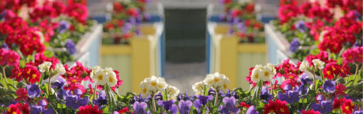 Panoramic flower boxes display Stock Photography