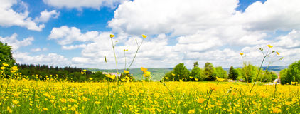 Panoramic flower field in spring Royalty Free Stock Photos