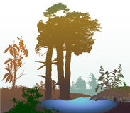 Panoramic forest wetland with natural lake and silhouettes of trees, grass and plants Stock Images