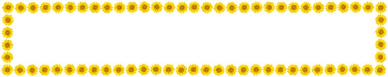 Panoramic frame of sunflower flowers on isolated white backgroun. D. View from above. Free space for text Royalty Free Stock Photography
