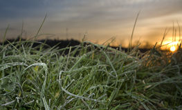 Panoramic of frost grass leaves at rising, Badajoz, Spain Royalty Free Stock Images