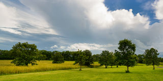 Panoramic of grass field. Stock Images