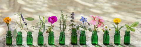 Panoramic green essential oil bottle, and flowers cornflower, geranium, lavender, mint, oregano, rosemary, marigold, thyme, basil. Panoramic essential oil stock images