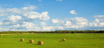 Panoramic green field Royalty Free Stock Photo