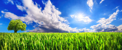 Panoramic green field with dynamic cloudscape Royalty Free Stock Photo