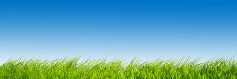 Panoramic green grass  Royalty Free Stock Image