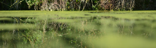 Panoramic green lake Stock Photo