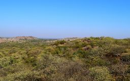 Panoramic Green Landscape of a Prosopis Juliflora forest and Hills captured from a Hill - A Natural Background with Blue Sky Royalty Free Stock Photos