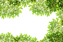 Panoramic Green leaves Stock Photos