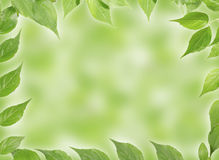 Panoramic Green leaves Royalty Free Stock Photos