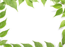 Panoramic Green leaves Royalty Free Stock Images