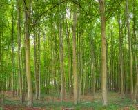 Panoramic Green woods in Tervuren park