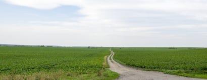 Panoramic ground road through green field stock photo