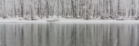 Panoramic Icy Winter Tree Reflections Stock Photos