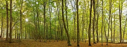 Panoramic image. From a forest Royalty Free Stock Images