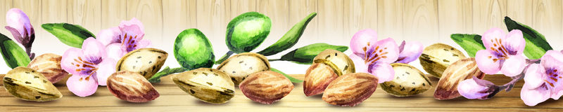 Panoramic image of almonds.  Watercolor. Panoramic image of almonds. Can be used for kitchen skinali. Watercolor Royalty Free Stock Photo