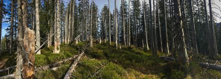 Panorama of alpine forest. Panoramic image of alpine forest stock photos
