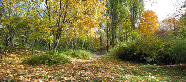 Panoramic image of the autumn park Stock Photo