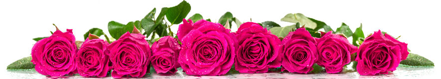 Panoramic image of a bouquet of roses Stock Photos