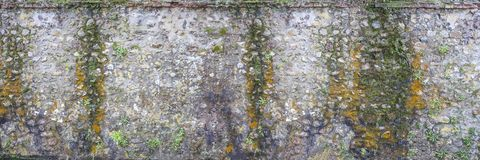 Panoramic image of a Decorativeold flint wall with green and yellow vegetable moss royalty free stock image