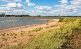 Panoramic image of the Dutch river Waal and the bank with planti. Ng on a warm day in the summer season. Many field eryngo plants grow in the foreground. An royalty free stock image