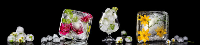 Panoramic image with flowers frozen in ice cubes. Royalty Free Stock Photo