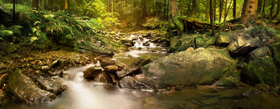 Panoramic image of the forest brook in the mountains Royalty Free Stock Photo