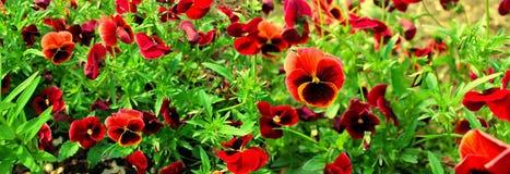Panoramic image of garden flowers. Royalty Free Stock Photos