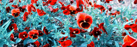 Panoramic image of garden flowers. Royalty Free Stock Photography