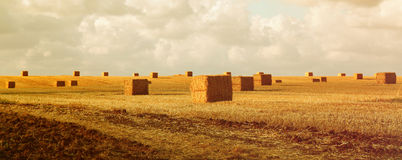 Panoramic image of gold wheat haystacks field at sunset light Royalty Free Stock Photos