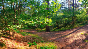 Panoramic image of mixed forest close to Baltic sea Stock Photo
