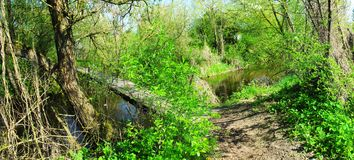 Panoramic image of the old bridge across the river. Panoramic image of the old wooden bridge across the river Stock Photography