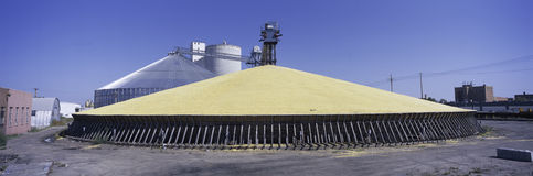 Panoramic image of a pyramid of corn stored Stock Images