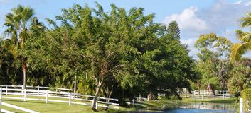 Panoramic image of rural pastures with white fences on a canal on a sunny day. royalty free stock images