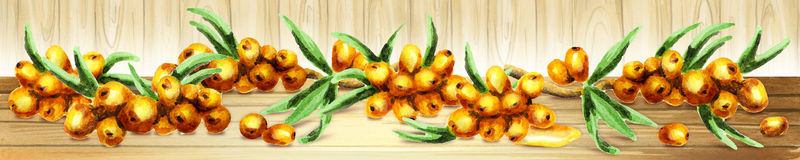 Panoramic image of Sea buckthorn. Can be used for kitchen skinali. Royalty Free Stock Image