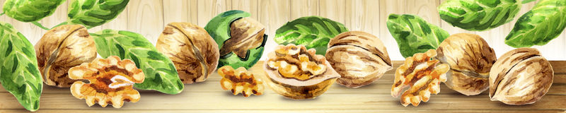Panoramic image of walnut. Watercolor. Panoramic image of walnut. Can be used for kitchen skinali. Watercolor Stock Images