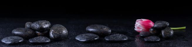 Panoramic image of zen stones with water drops and a tulip royalty free stock photography
