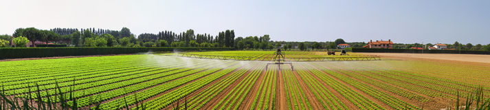 Panoramic irrigation field Royalty Free Stock Photo
