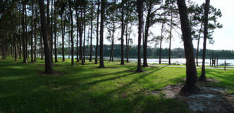 Panoramic Lake View with Trees. Early morning or late afternoon panoramic lake view through a line of trees Stock Image