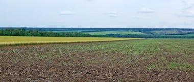 Panoramic landscape. Royalty Free Stock Photo