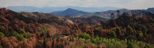 Panoramic Landscape. Panoramic view of a hill with burned trees  and mountain on background Stock Images