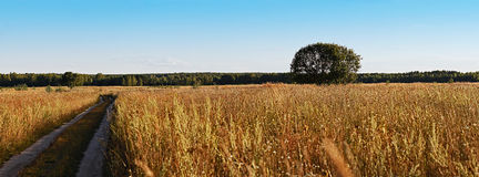 Panoramic landscape. Field, tree and road Stock Image
