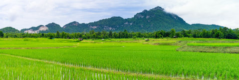 Panoramic landscape of agricultural fields Royalty Free Stock Photo