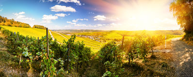 Panoramic landscape with autumn vineyards royalty free stock images