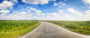 Panoramic landscape with country road and corn fields Royalty Free Stock Photo