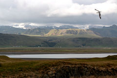 Panoramic of landscape of dyrholaey.  royalty free stock images